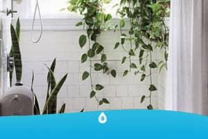10 piante meravigliose per il tuo bagno azienda idraulici