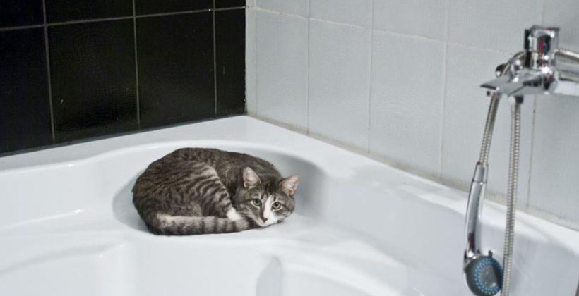 Un bagno a misura anche di gatto