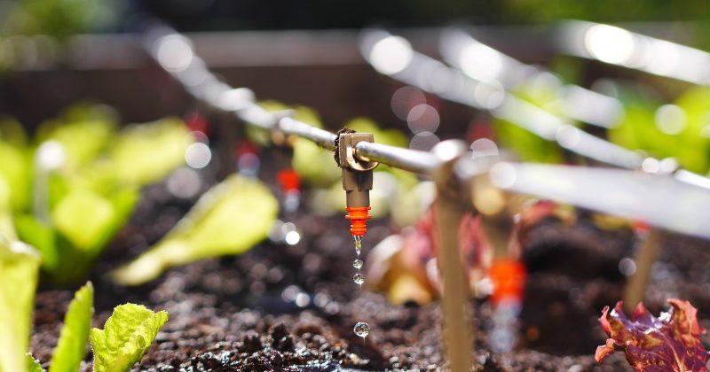 La Fertirrigazione per nutrire le nostre piante